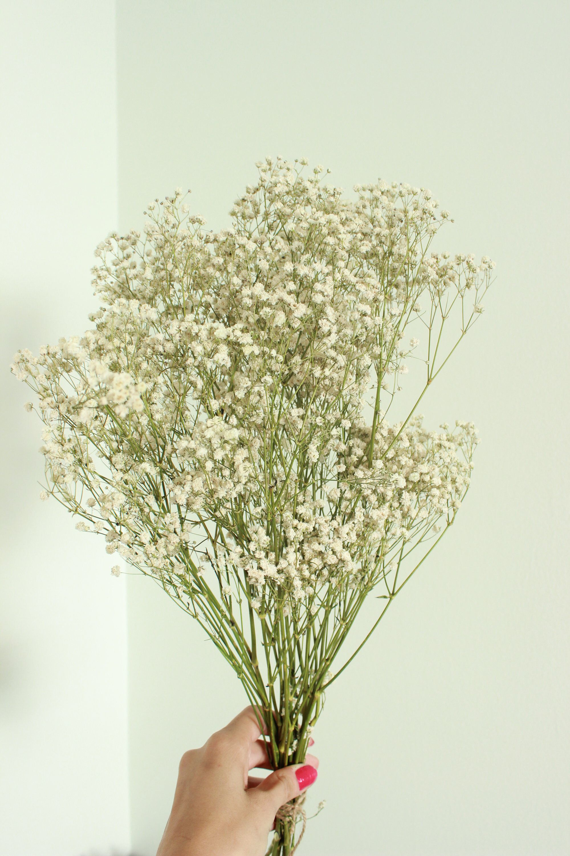 Dry Babies Breath Flowers 8 10 Branches Dried Flowers For Etsy Dried Flowers How To Preserve Flowers Dried Baby S Breath