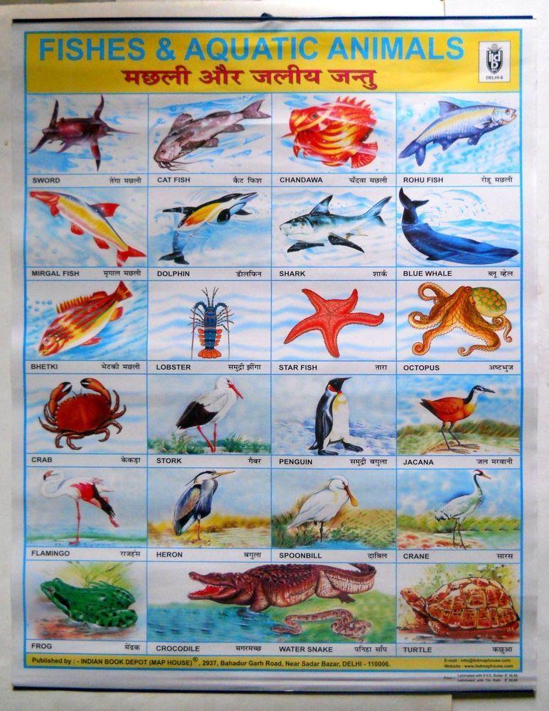 India Vintage School Chart Poster Print Fishes & Aquatic