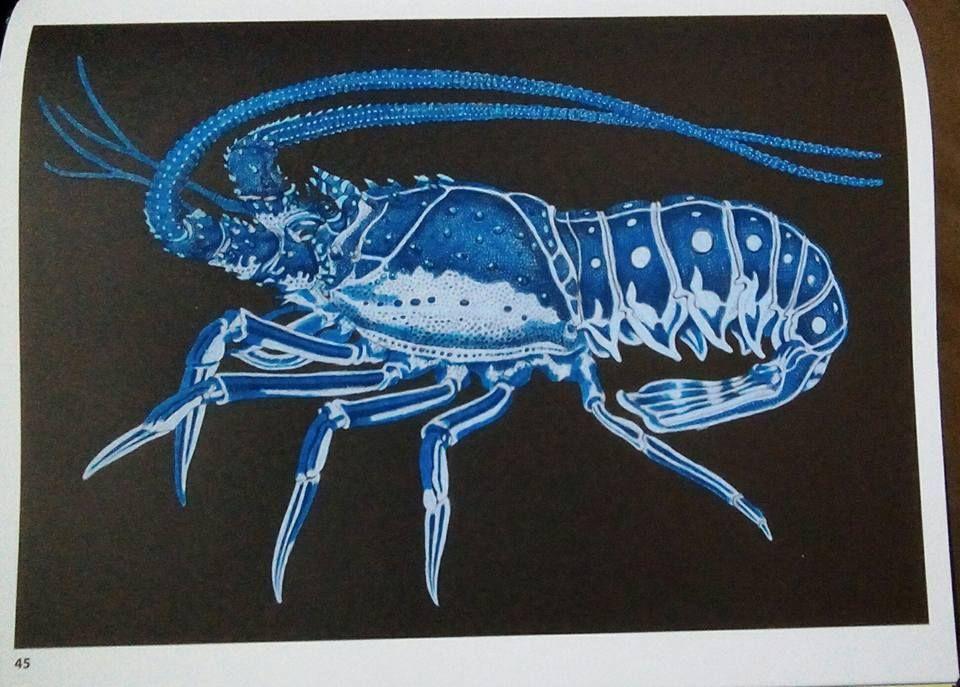 Lobster By Susan Lowe