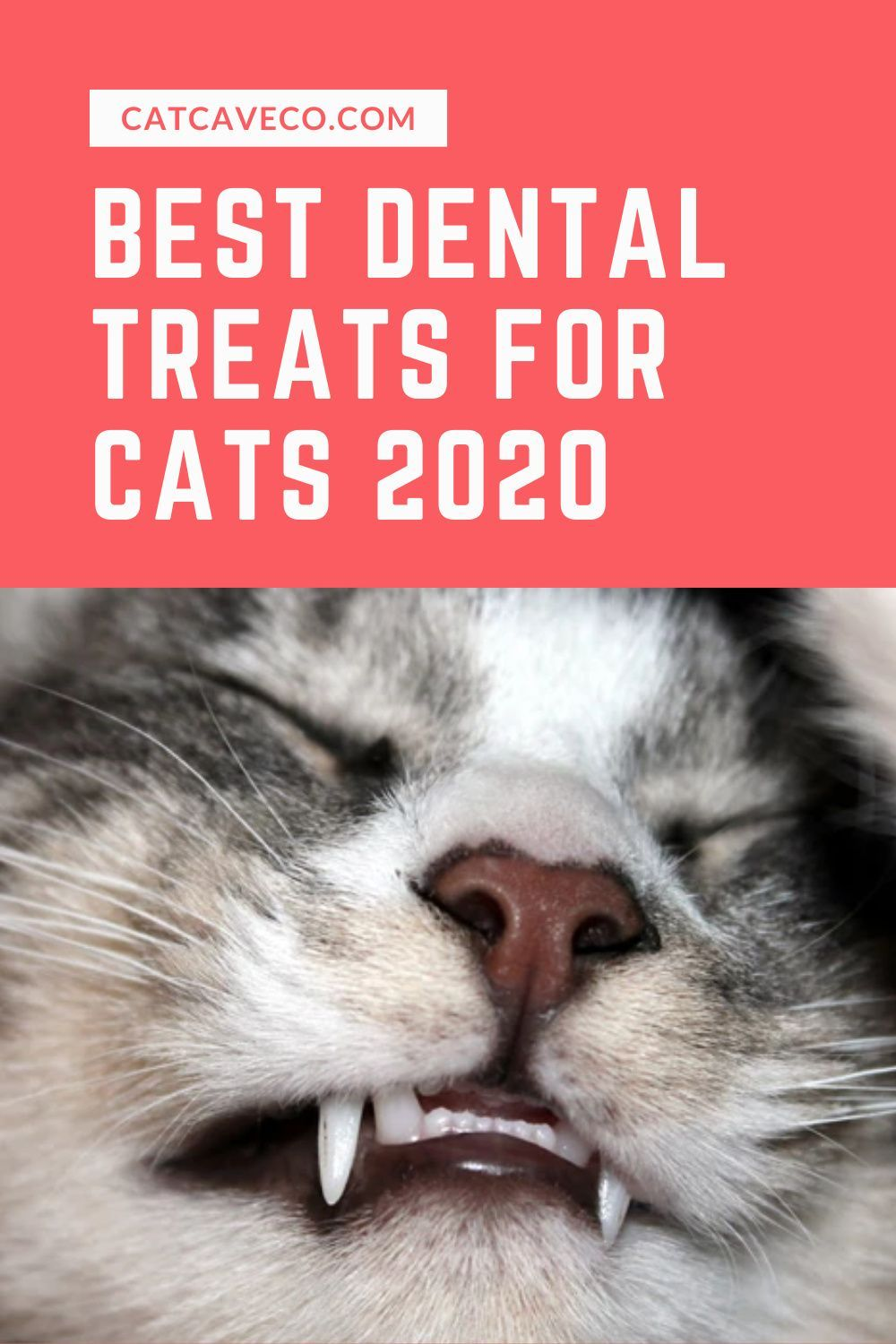 Best Effective Dental Treats For Cats 2020 In 2020 Cat Dental Health Dental Treats Dental