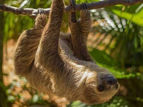 sloth at Wild Florida wildlife