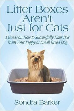 How to litter box train a dog solutioingenieria Choice Image