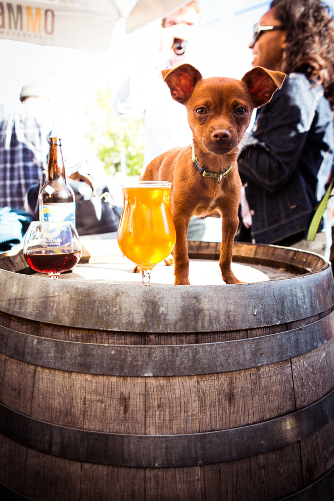 Pet Friendly Restaurants In San Francisco In 2018 Animals