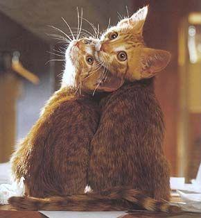 2 kittays