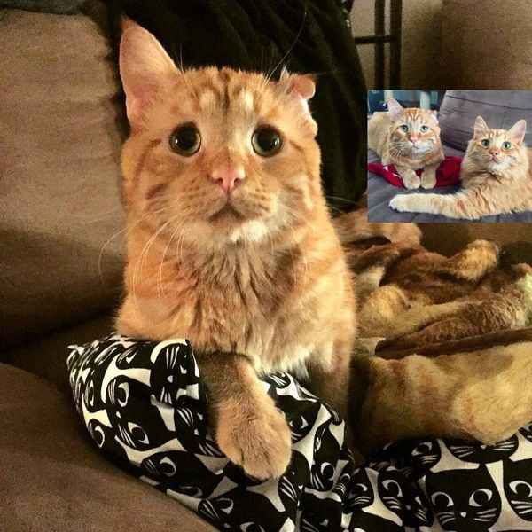 Former Shelter Cat Takes to Wobbly Kitty Who Needed