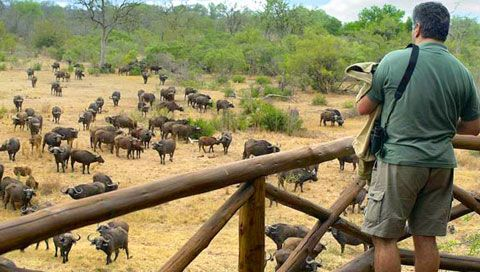 Game viewing from the deck of Lukimbi Safari Lodge. Images of Kruger National Park