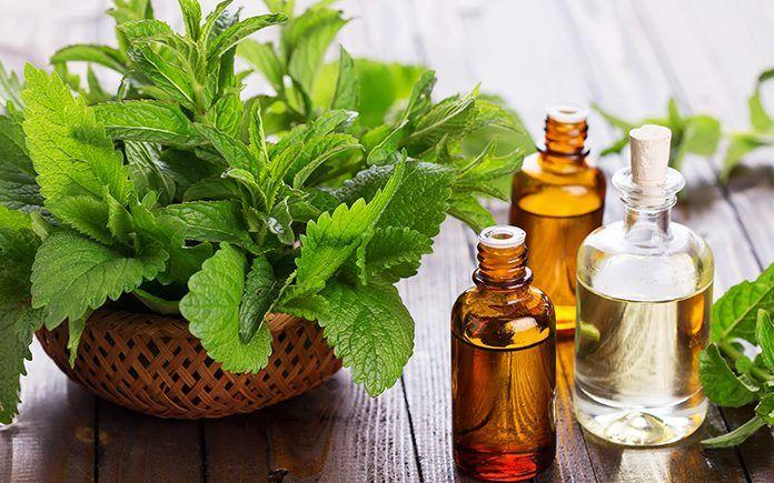 19 причин приобрести эфирное масло мяты перечной | Healing essential oils, Essential oils for vertigo, Herbalism