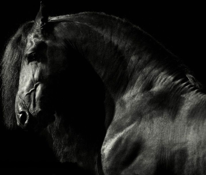 natures best photography 2016 | Friesian... As a kid, these were the horses I dreamed of. | + Visual ...