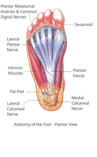 sole of the foot