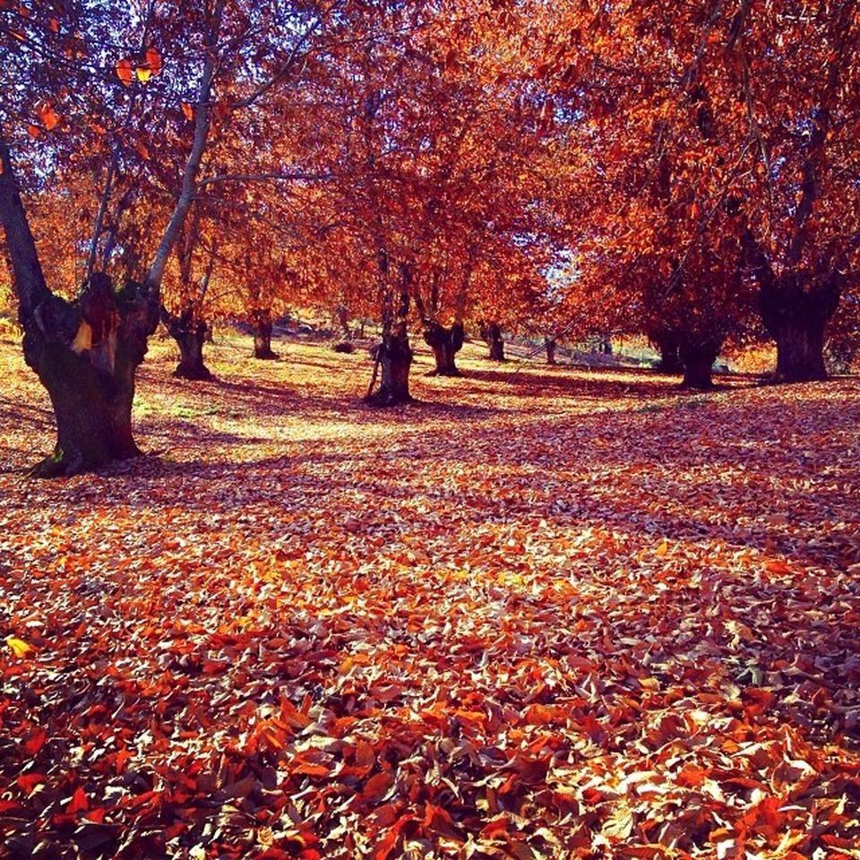 Parque Natural Sierra De Aracena Y Picos De Aroche Parques Naturales Andalucia España Natural