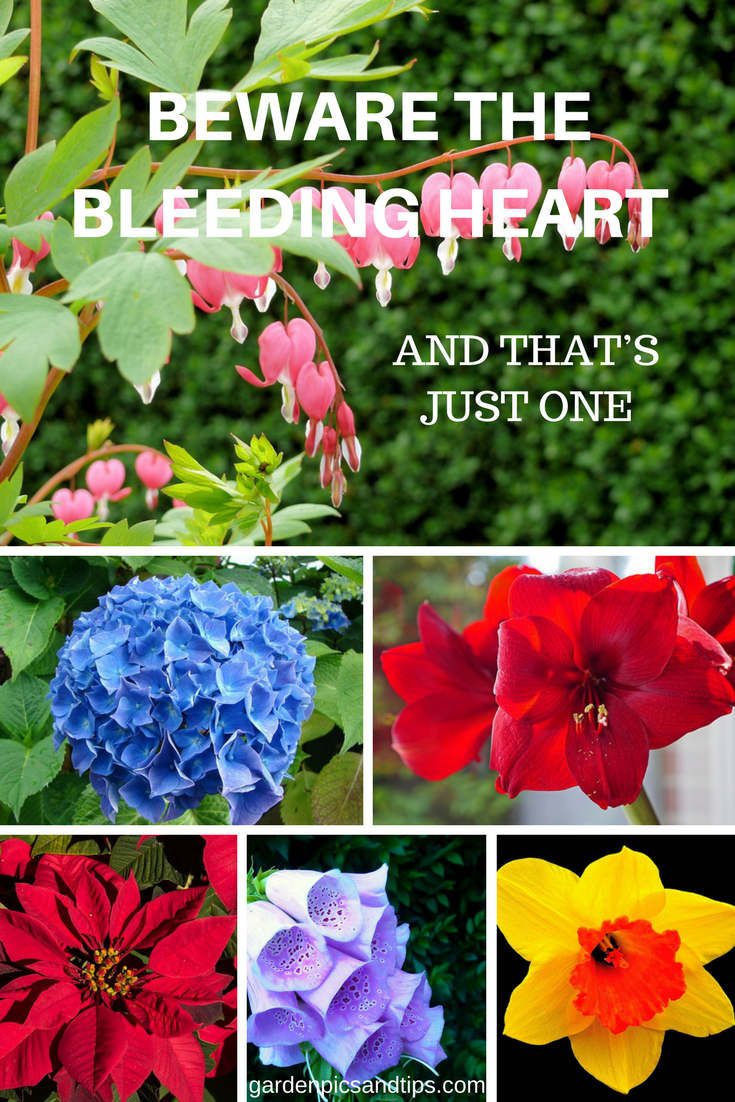 Beware The Bleeding Heart And That S Just One Bleeding Heart Flower Quotes Organic Vegetable Garden