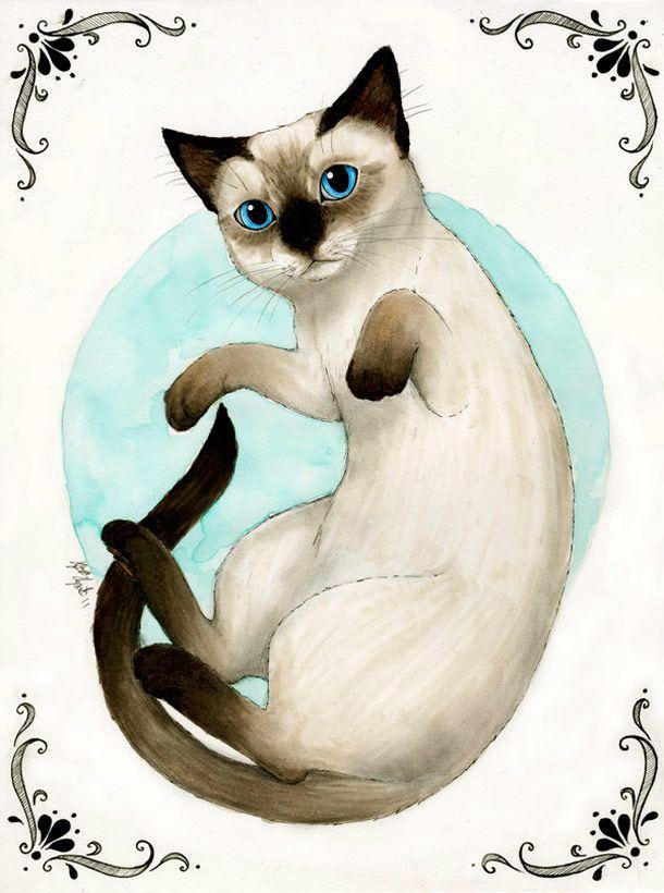 Nayla Smith e seu fascínio por gatos | ... para que a verdade não ...