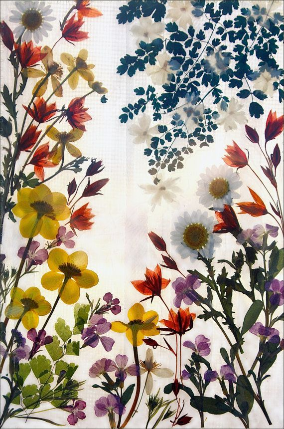 Pin By Yejin Ahn On Floral Pressed Flower Art Flower Art Pressed Flowers