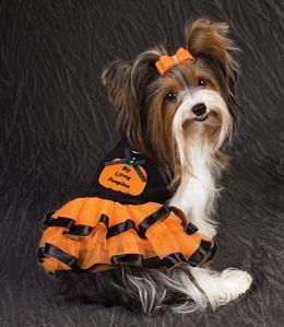 My Little Pumpkun Dog Dress