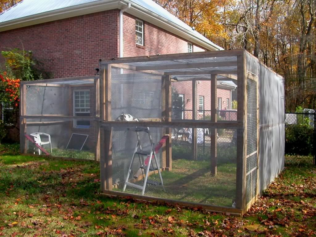 Large Outdoor Cat Enclosure Attached Outside Cat