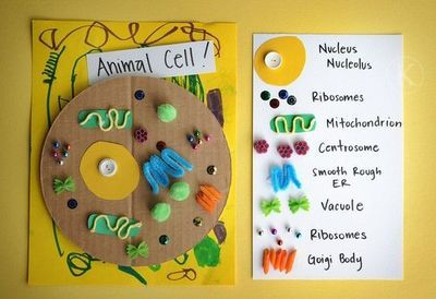 parts of animal cell animal cell model diagram project parts rh pinterest com
