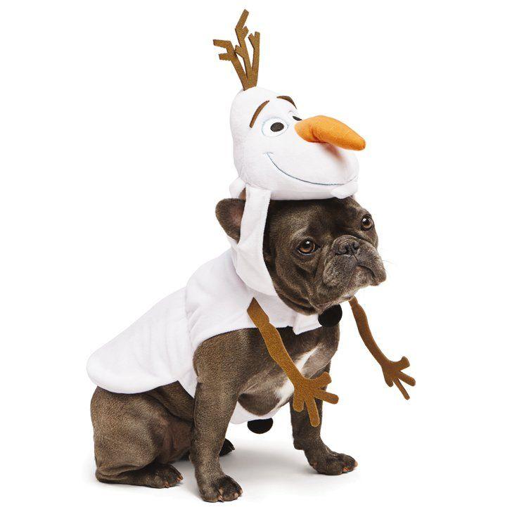 Olaf - Deguisement halloween chien ...