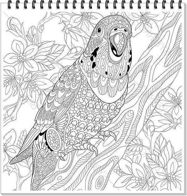 papagei mandala ausmalbilder zum ausdruckenparrot mandala