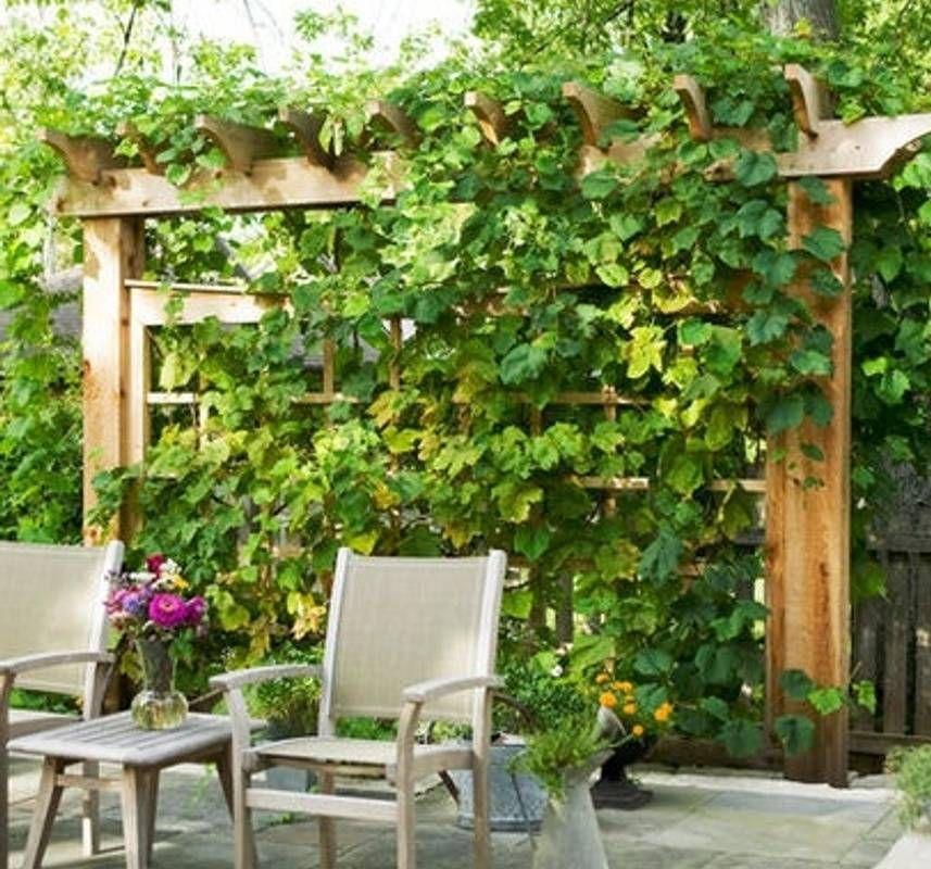 Grape Arbor, Backyard Garden