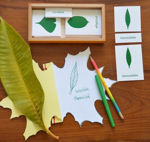 nature journal template