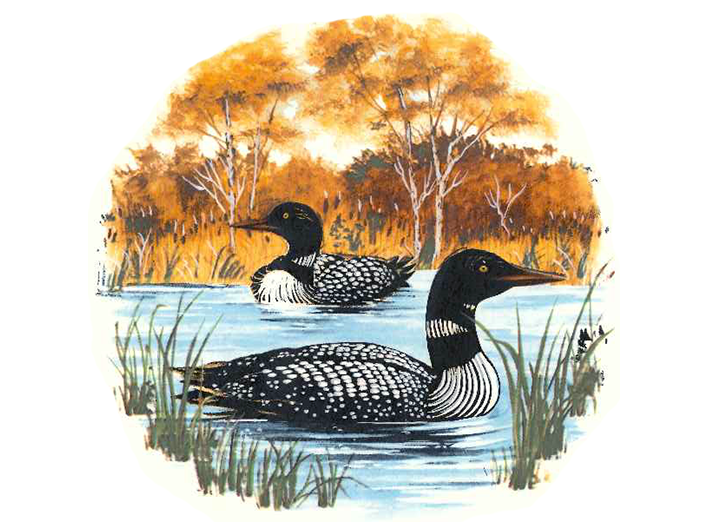 "6 Loons on the Lake 2/"" Waterslide Ceramic Decals Xx"