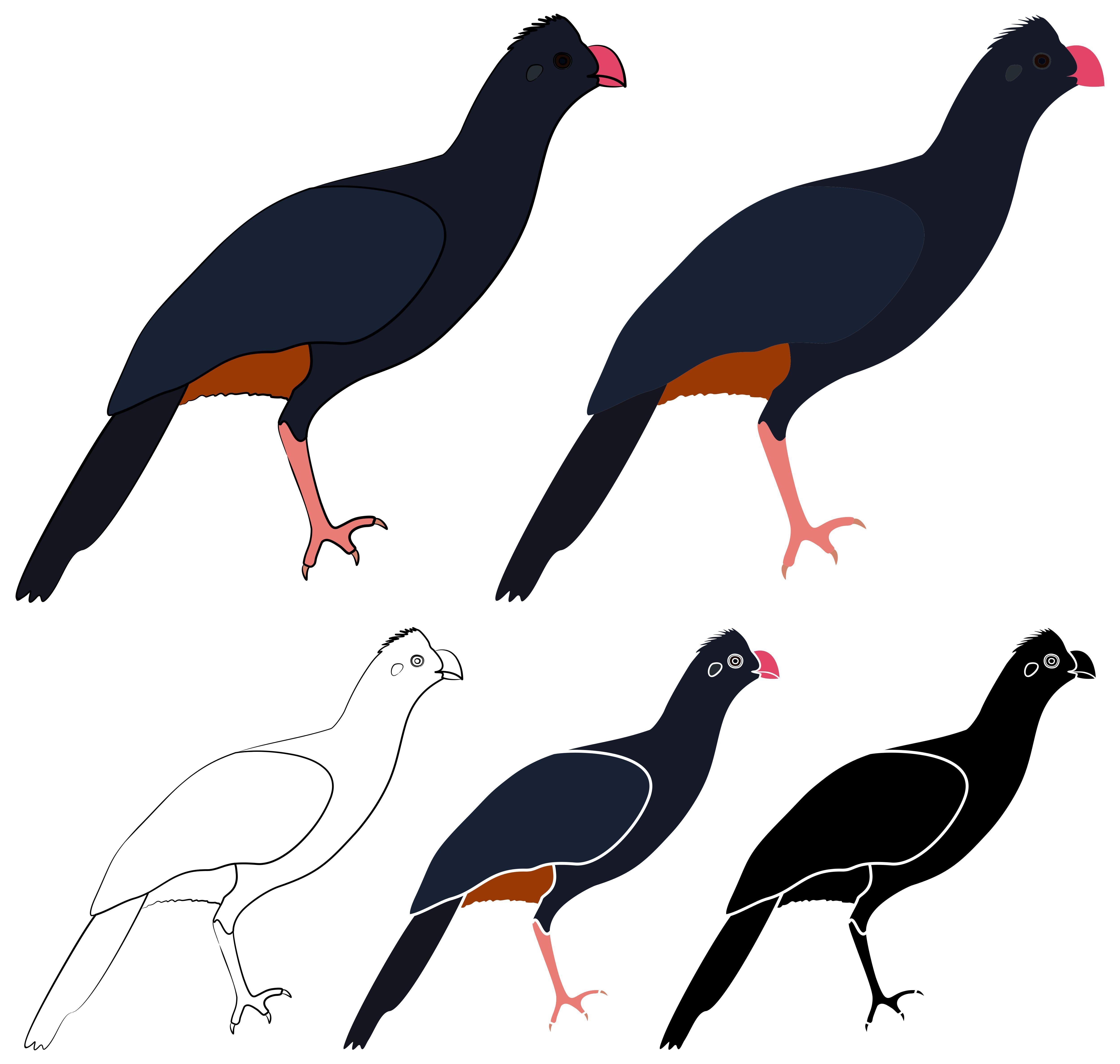 Northeast Mutum Bird in profile view em 2020 Ilustrações