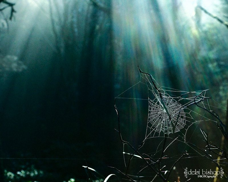 Spider Web Nature Forest Background Sunbeams