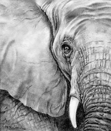 Elephant graphite drawing by patty storms