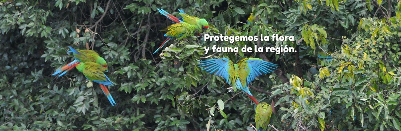 The Sierra Gorda Nature Reserve Protects The Flora And Fauna Of Central Mexico Gorditas Fauna Queretaro