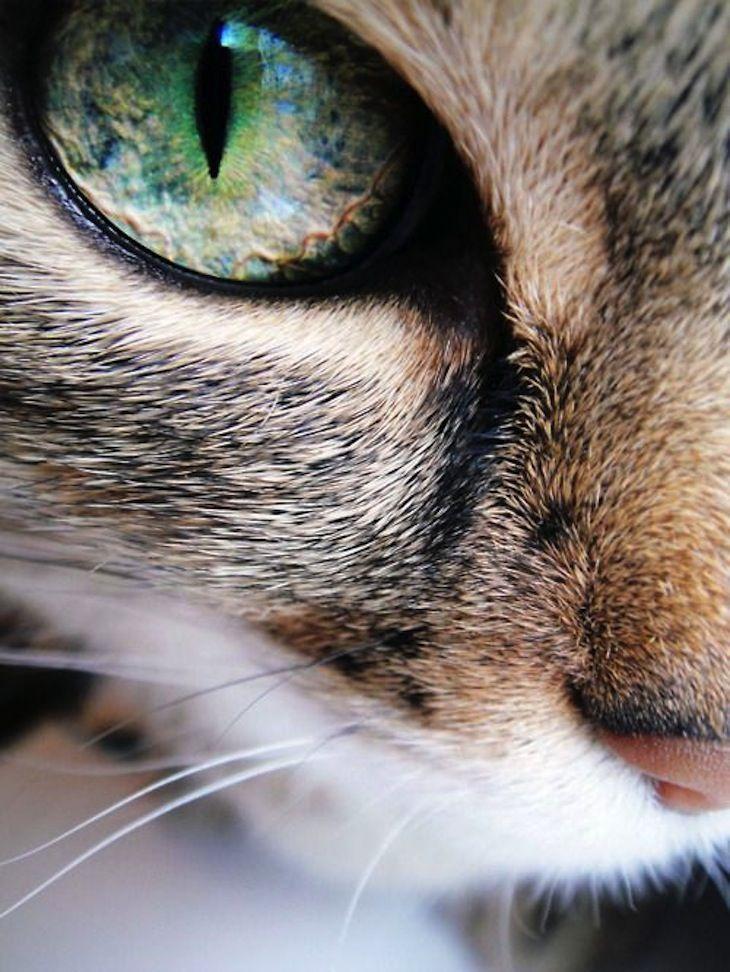 TOP 10 Amazing Macro Images - Tiere -
