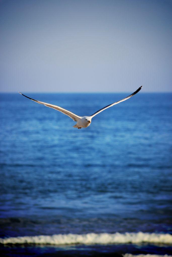 B E A C H Aves Volando Gaviotas Volando Gaviota