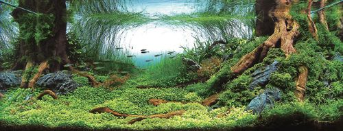 Elegant Top 10 Aquascapes In 2008 ADA Aquatic Plants Layout Contest   Place
