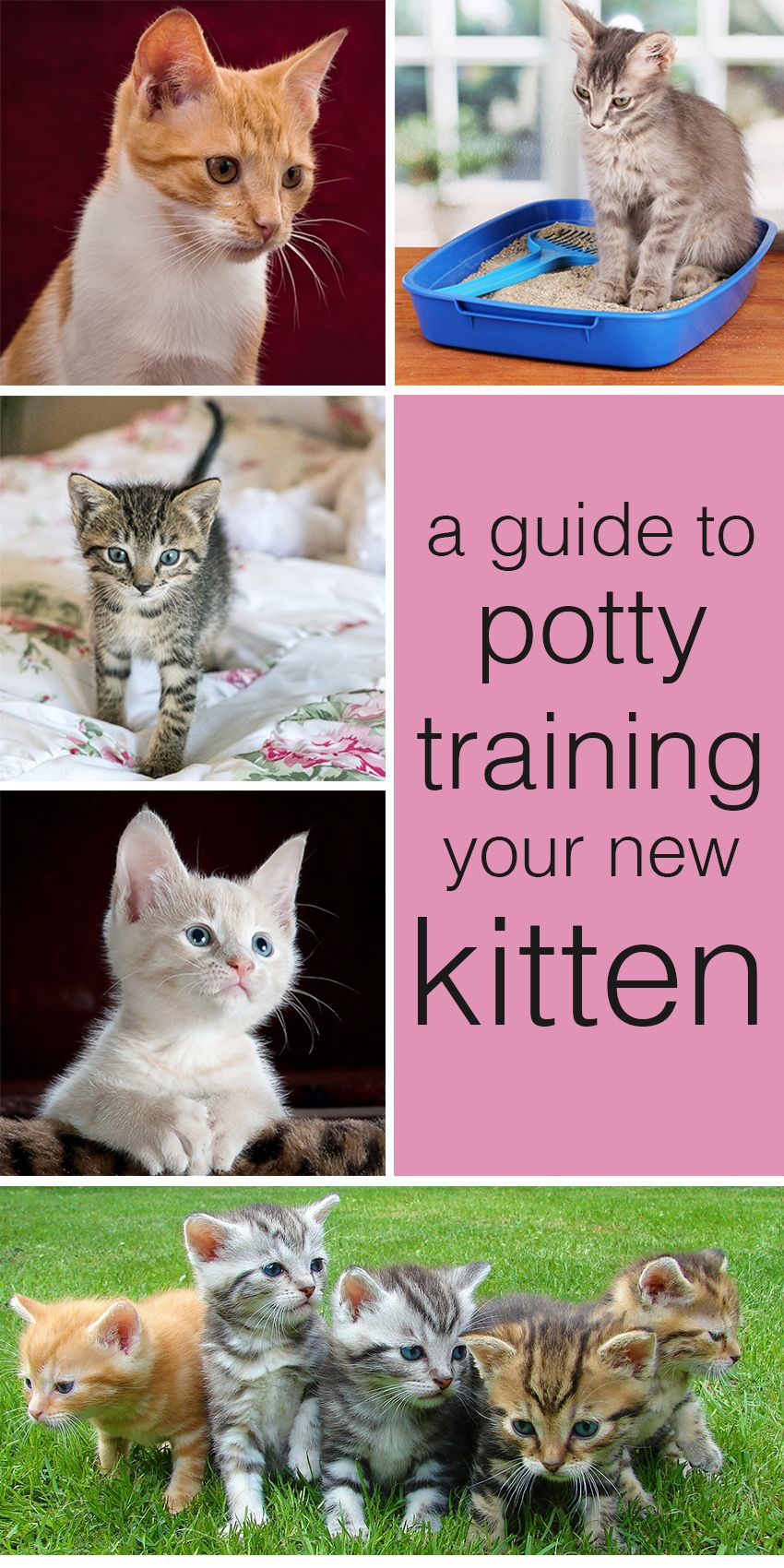 A Complete Guide To How To Potty Train A Kitten Giving You All The Information You Need To Succe Cat Toilet Training Training A Kitten Cat Training Litter Box