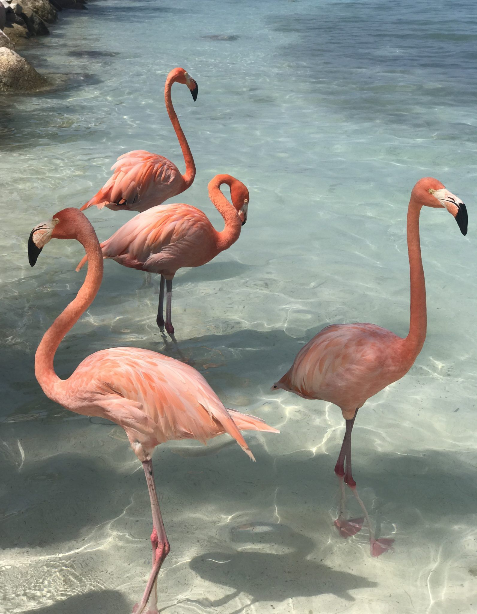 How to Visit Flamingo Beach - Planes, Trains and Champagne