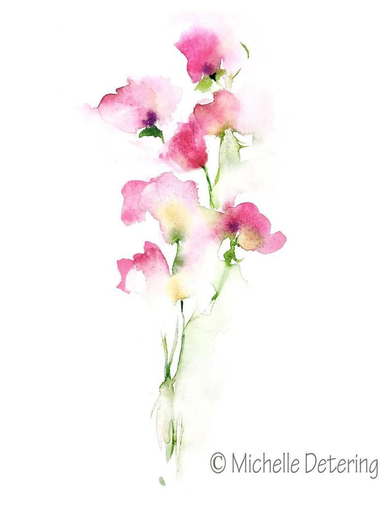 Sweet Pea Watercolor Giclee Print Flower Watercolor Flower Art