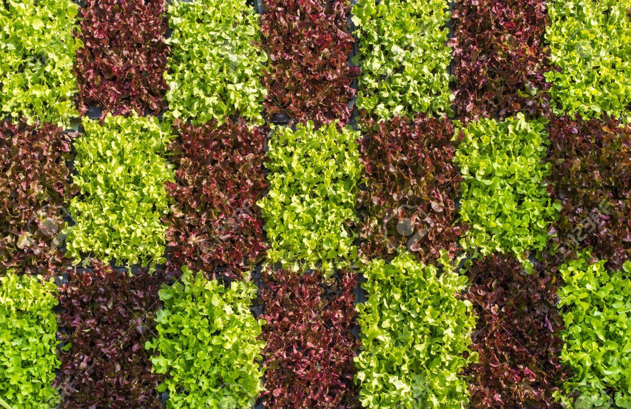 Related image | Kitchen Garden | Pinterest | Gardens