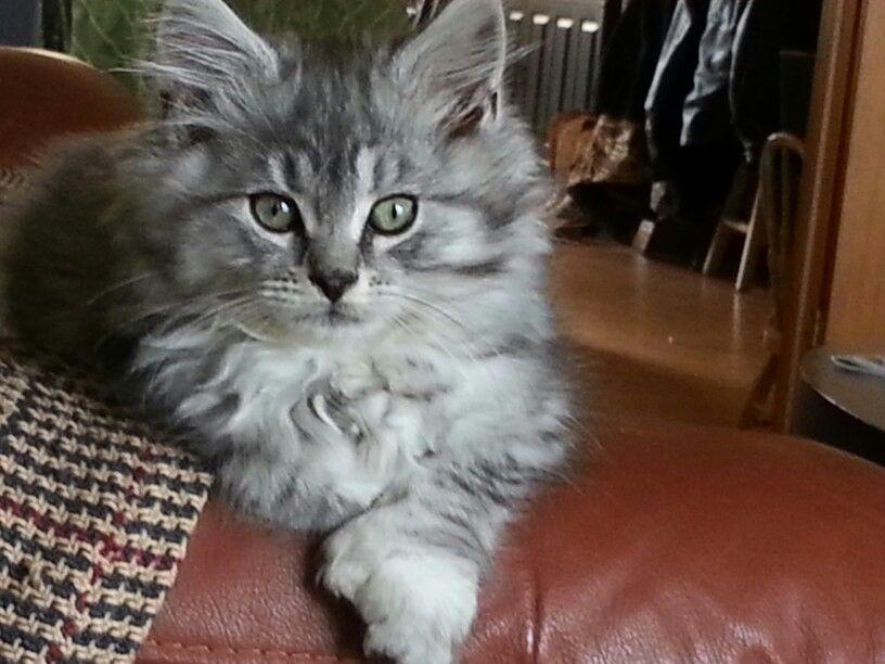 Pin On Adorable Kitty