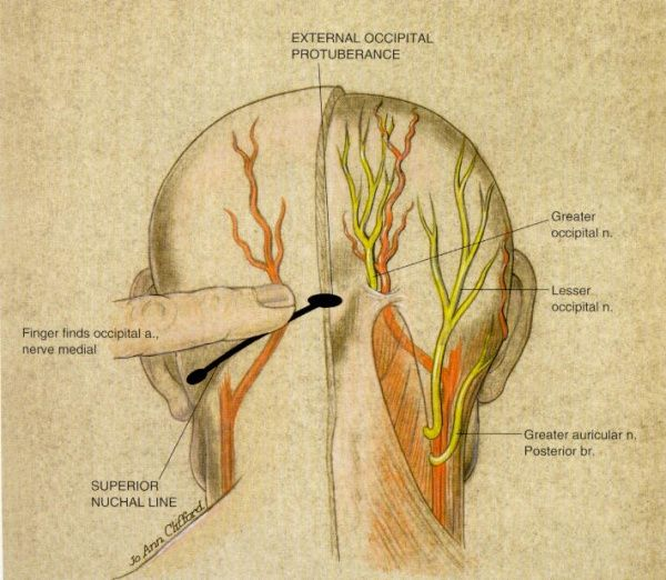 greater occipital nerve location | nerve charts for head | Pinterest ...