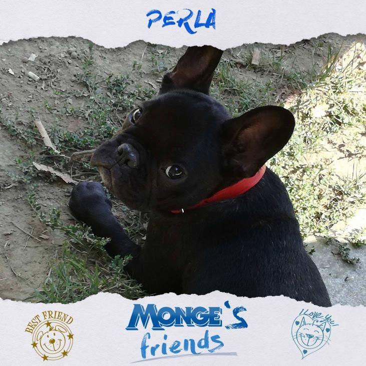 Perla #Mongesfriends