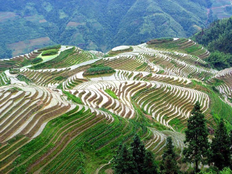 صور اجمل منظر في الكون مناظر طبيعيه خلابة Vietnam Holidays Rice Terraces World