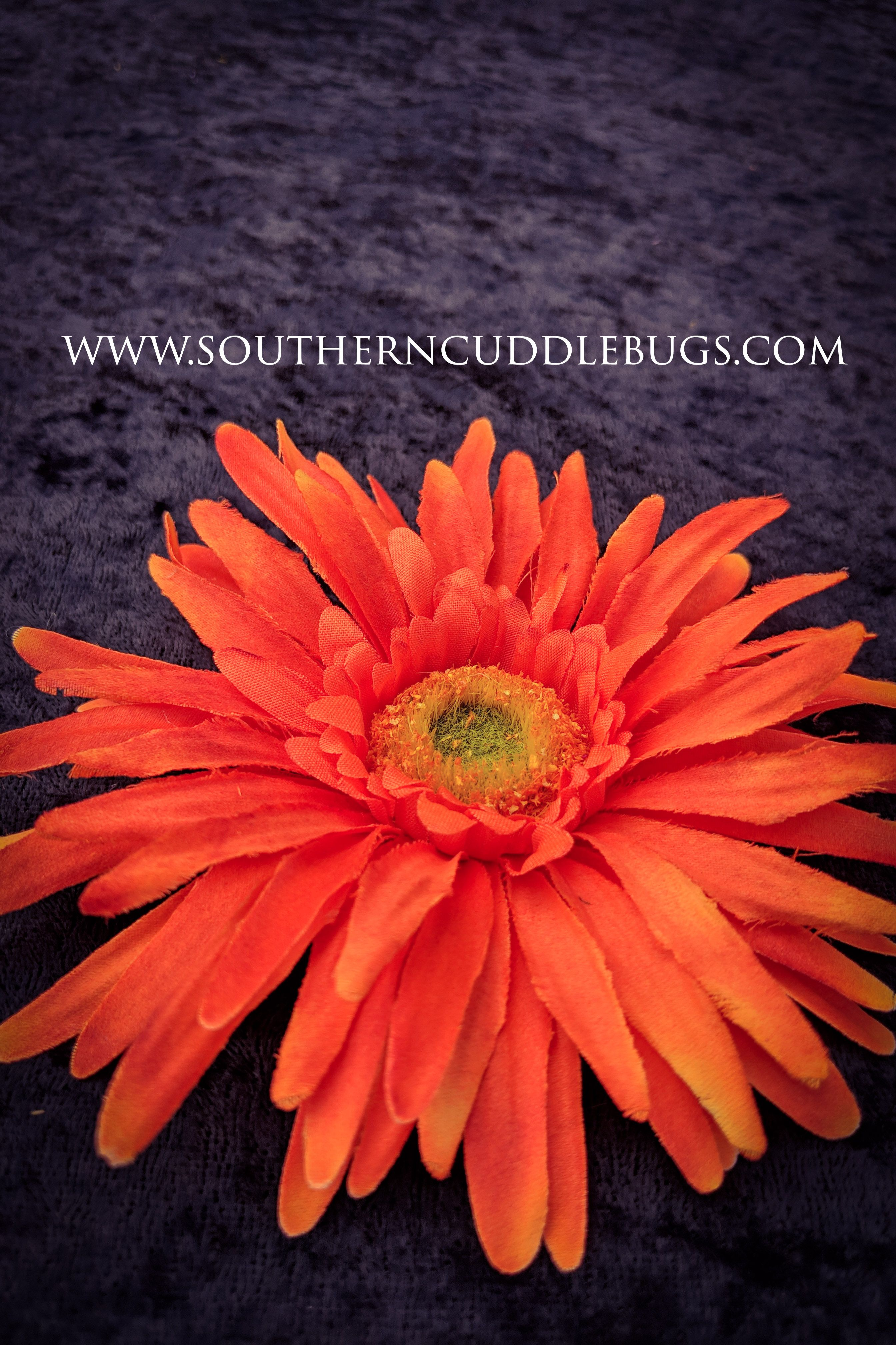 The Orange Thin Petal Daisy Magnet Is Another Beautiful
