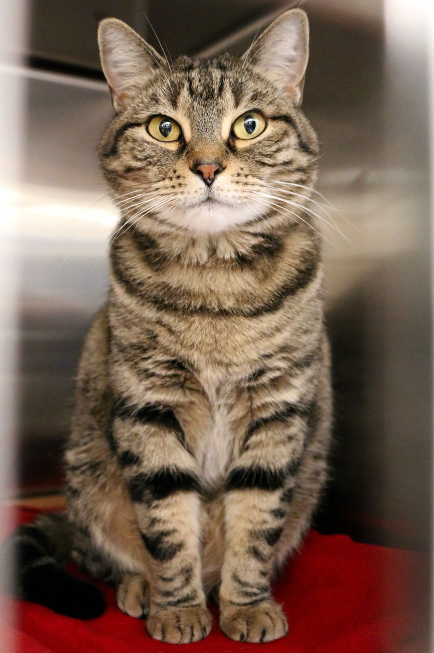 Aurora Has Been Adopted From Petsmart In Issaquah One Of Seattle Humane S Satellite Locations Http Www Seattlehuman Animais De Estimacao Gatinhos Estimacao