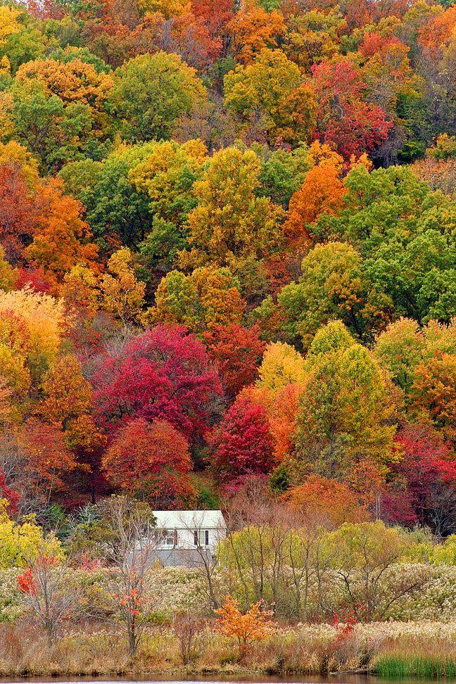 가을 숲의 집
