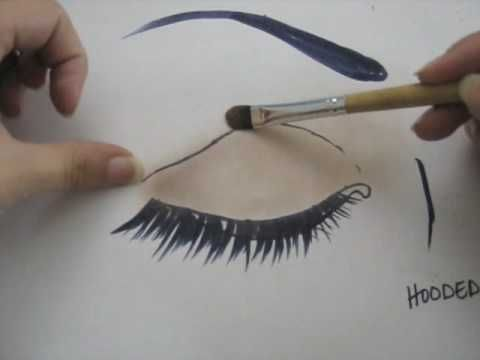 wow! this information is amazing!!! ~~~hooded eyes diagram tutorial Animal Eye Diagram wow! this information is amazing!!! ~~~hooded eyes diagram tutorial