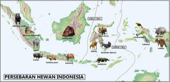 Kali Ini Akan Dibahas Tentang Persebaran Flora Dan Fauna Di Indonesia Beserta Gambar Sederhana Untuk Memudahkanmu Mengingat Gambar Flora Dan Fauna Hewan Flora