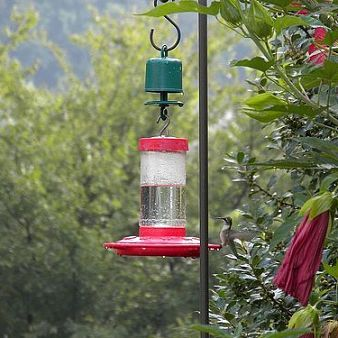 """Hummingbird feeder protection: 1) Shown: Perky Pet Guard. 2)  Use water moat (see """"Trap-It"""" or """"Detourant Ant Moat""""). 3) Purchase flat feeder like """"humzinger"""" with built in moat. 4) Rub thick coat of petroleum jelly halfway up pole.* 5) Use dab grease under bottom of holes to keep wasps away. * Grease can get in bird feathers, which is bad. :("""