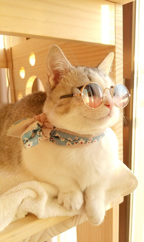 Best Funny Cats 11
