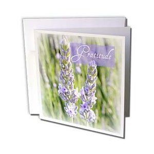 Gratitude Lavender Flowers Inspirational Quotes Photography - Greeting Cards