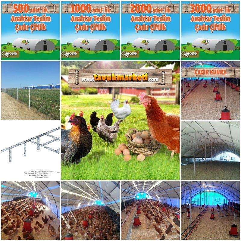 Anahtar Teslim çadır Kümes Fiyatları Tavuk Kümesi Rooster