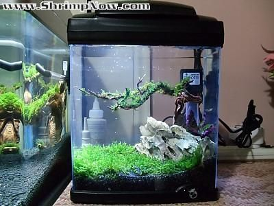 Planted Tank Heavily Planted Betta Tank By Dan Adams Aquascape Awards Planted Betta Tank Betta Tank Betta Fish Tank
